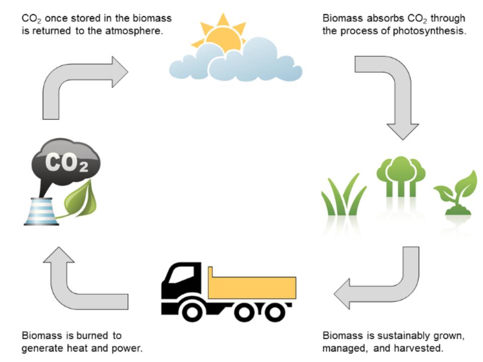 Biomass - Eco Green Energy Centre Ltd - Biomass Installers